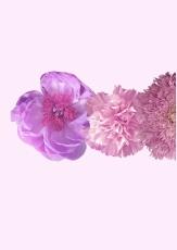 22 Fleurs 1
